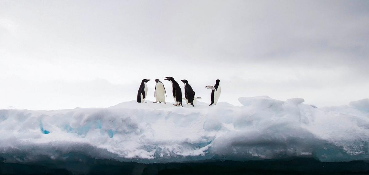 Антарктида достигла максимальной температуры в 2020 году Подтверждено ООН.